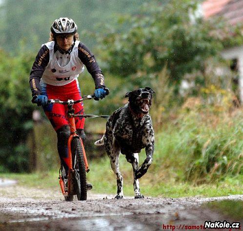 Hostěnický běh se psem (i jízda na kole, koloběžce)
